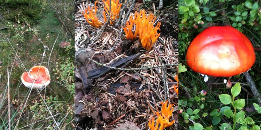 Fungi in Clocaenog Forest